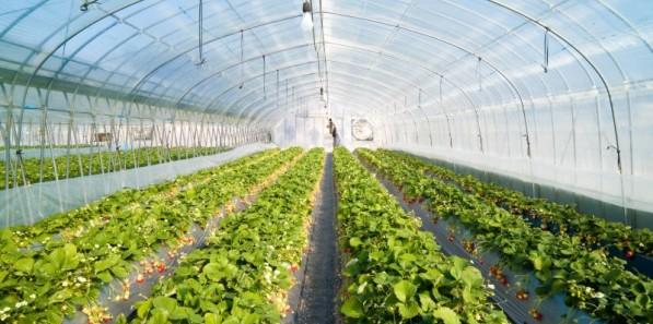 功能与寿命可调控农膜研究取得进展