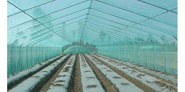 农膜技术取得重要进展 新型棚膜地膜可替代高档进口产品