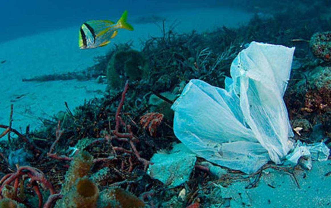 多数海洋塑料垃圾下落不明 专家:可能落在海床上