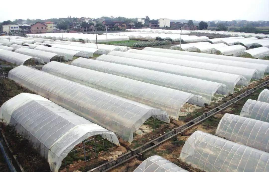 新规!非农用薄膜,禁止在农业上使用