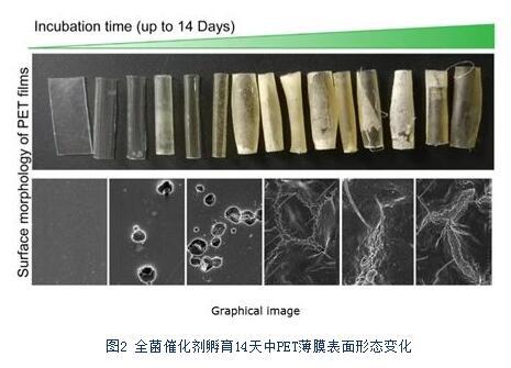 科研人员开发出全新的嗜热全菌催化塑料生物降解策略