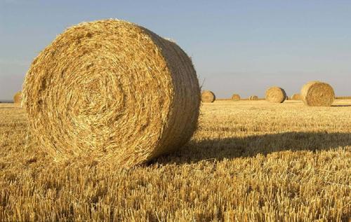 从小麦秸秆中开发出新型可生物降解的聚氨酯泡沫材料